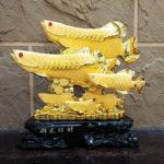 ปลามังกรมงคล 6 ตัว